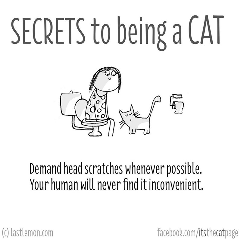 Text - SECRETS to being a CAT Demand head scratches whenever possible. Your human will never find it inconvenient. (0) Lastlemon.com facebook.com/itsthecatpage