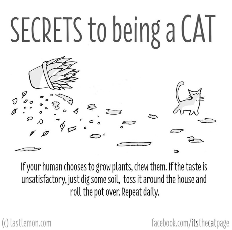 Text - SECRETS to being a CAT o If your human chooses to grow plants, chew them. If the taste is unsatisfactory,just dig some soil, toss it around the house and roll the pot over. Repeat daily. (0) Lastlemon.com facebook.com/itsthecatpage