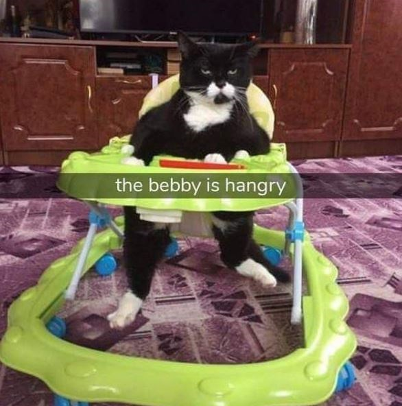 Cat - the bebby is hangry
