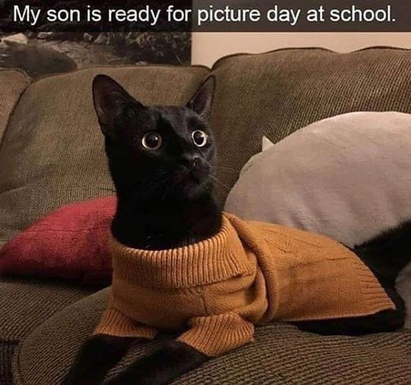 Cat - My son is ready for picture day at school.