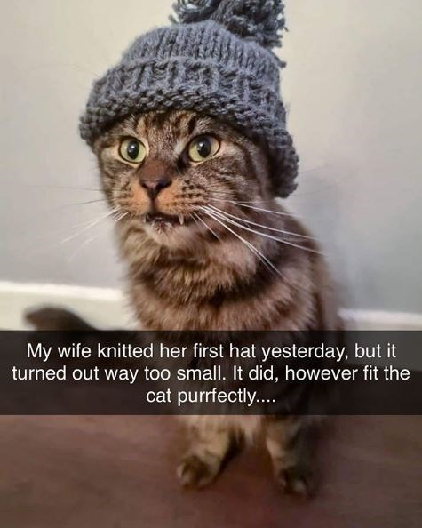 Cat - My wife knitted her first hat yesterday, but it turned out way too small. It did, however fit the cat purrfectly....