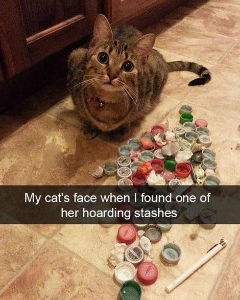 Cat - My cat's face when I found one of her hoarding stashes