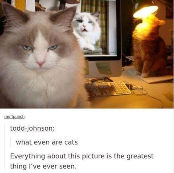 Cat - muffpunch: todd-johnson: what even are cats Everything about this picture is the greatest thing I've ever seen.