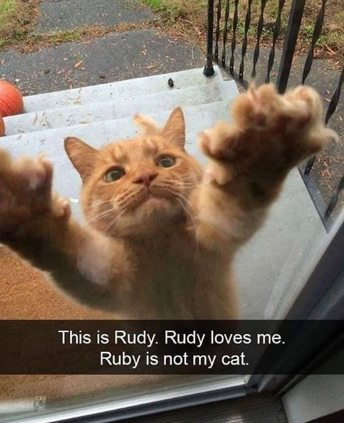 Cat - This is Rudy. Rudy loves me. Ruby is not my cat.