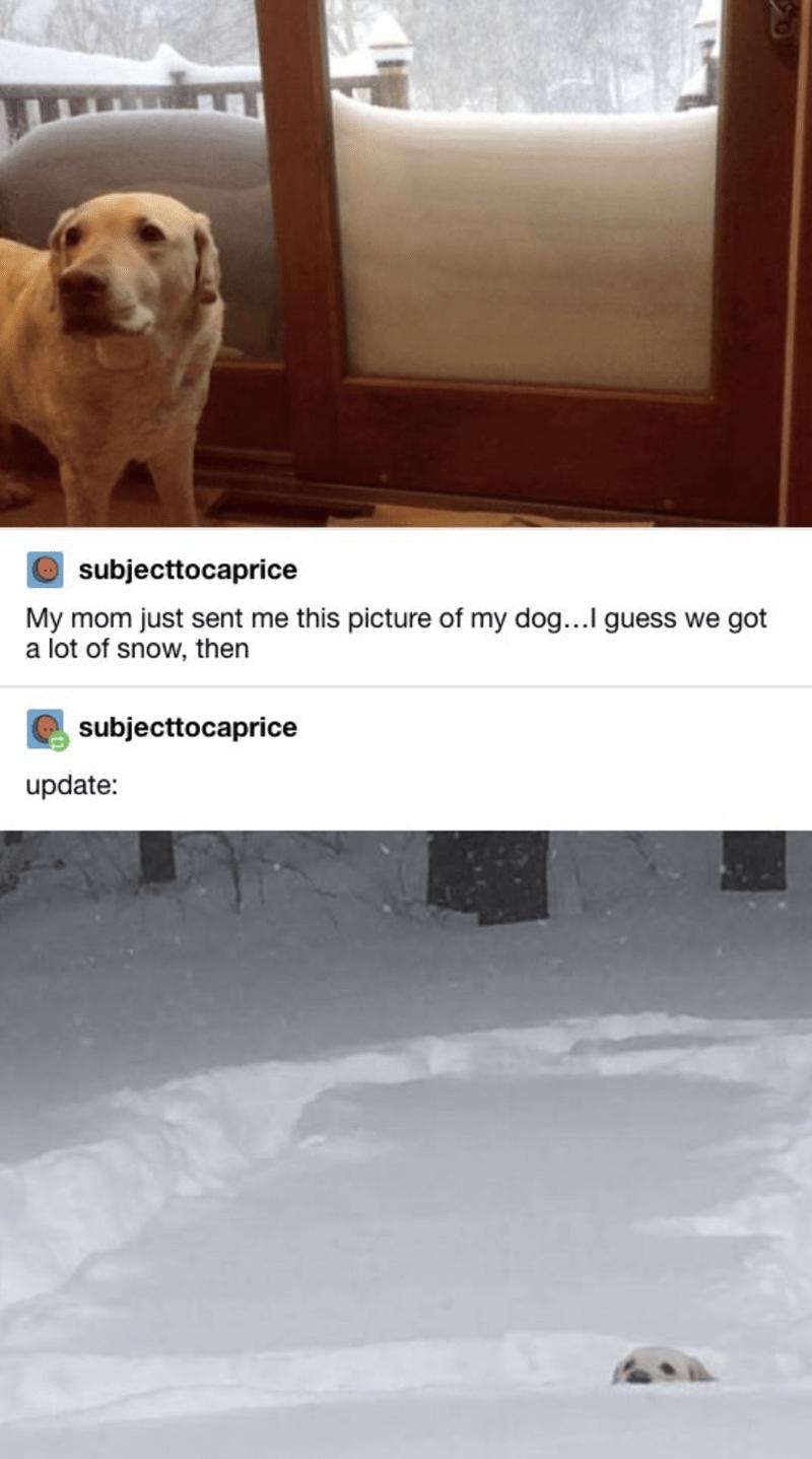 dog memes - 9388699392