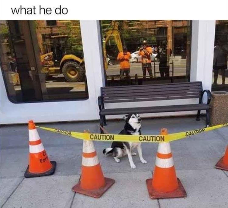 dog memes - 9388725248