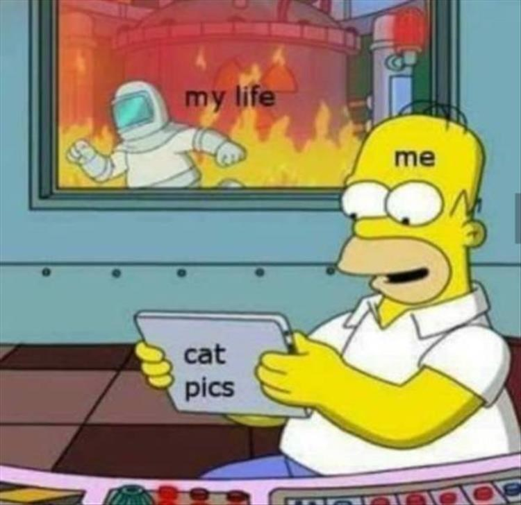 cat memes - 9388726784