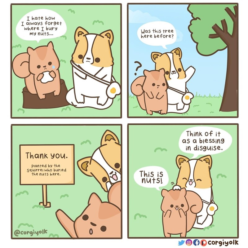 Cartoon - I hate how I always forget where I bury my nuts... Was this tree here before? ilans Think of it as a biessing in disguise. Thank you. Pianted by the Squirrei who buried the nuts here. This is nuts! @corgiyolk corgiyolk