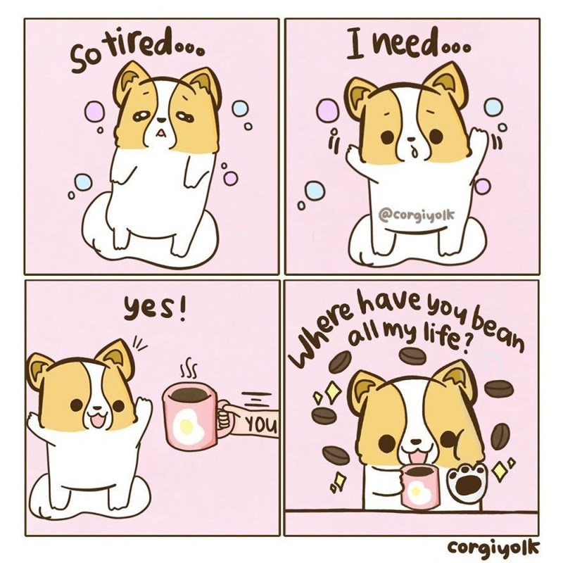Cartoon - tiredoo. Ineedo. So @corgiyolk have you bean all my life? yes! YOU corgiyolk where