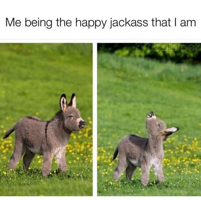 Vertebrate - Me being the happy jackass that I am