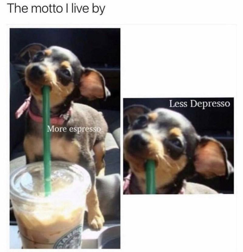 Dog - The motto I live by Less Depresso More espresso
