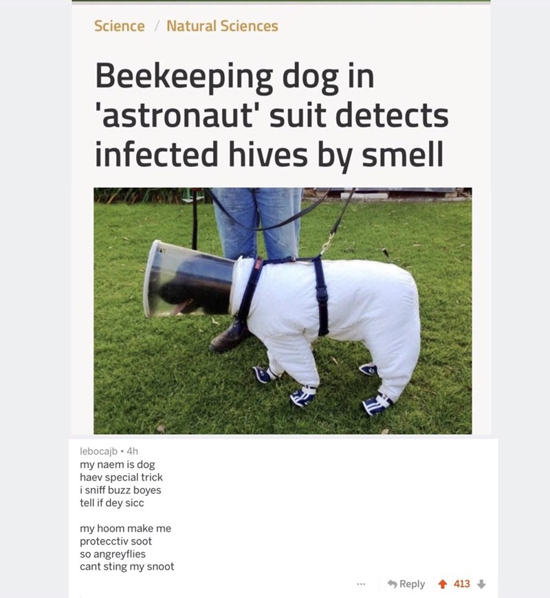 Canidae - Science/Natural Sciences Beekeeping dog in 'astronaut suit detects infected hives by smell lebocajb 4h my naem is dog haev special trick i sniff buzz boyes tell if dey sicc my hoom make me protecctiv soot so angreyflies cant sting my snoot Reply 413