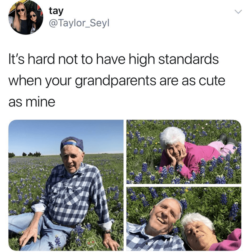 Adaptation - tay @Taylor_Seyl It's hard not to have high standards when your grandparents are as cute as mine