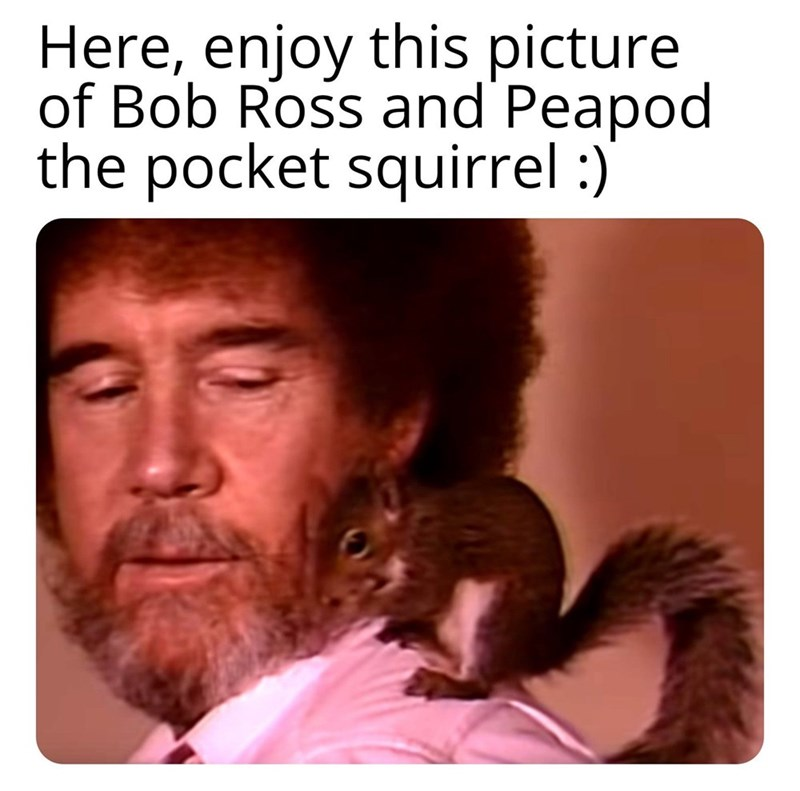 Text - Here, enjoy this picture of Bob Ross and Peapod the pocket squirrel :)