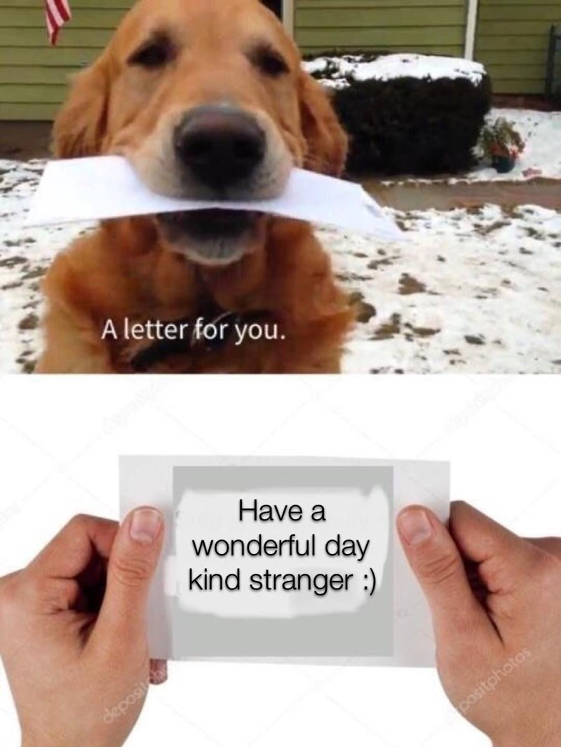 Dog - A letter for you. Have a wonderful day kind stranger : deposit pasitphotos