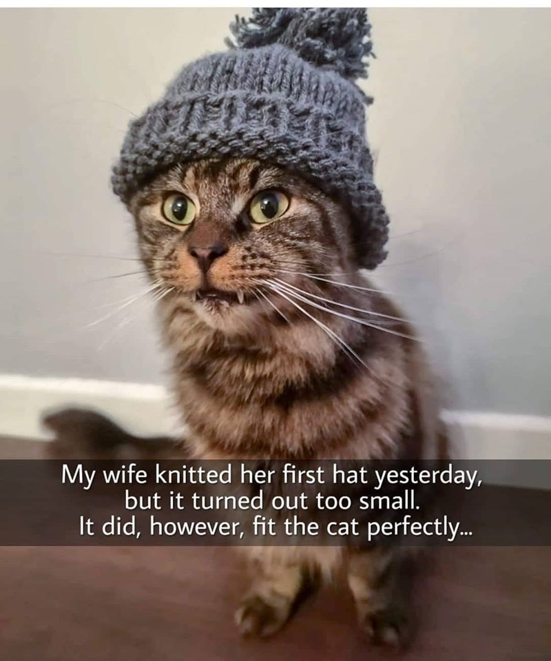 Cat - My wife knitted her first hat yesterday, but it turned out too small. It did, however, fit the cat perfectly..