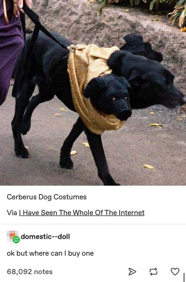 Mammal - Cerberus Dog Costumes Via IHave Seen The Whole Of The Internet domestic--doll ok but where can I buy one 68,092 notes