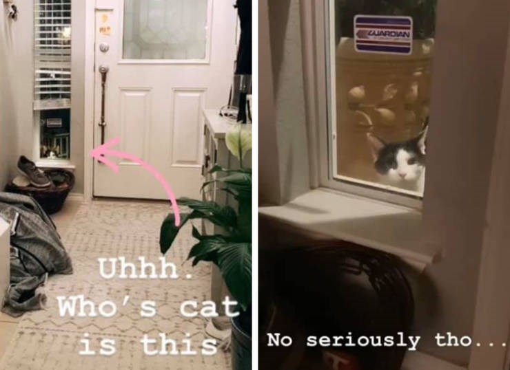 Door - LJARDIAN Uhhh Who' s cat No seriously tho.. is this