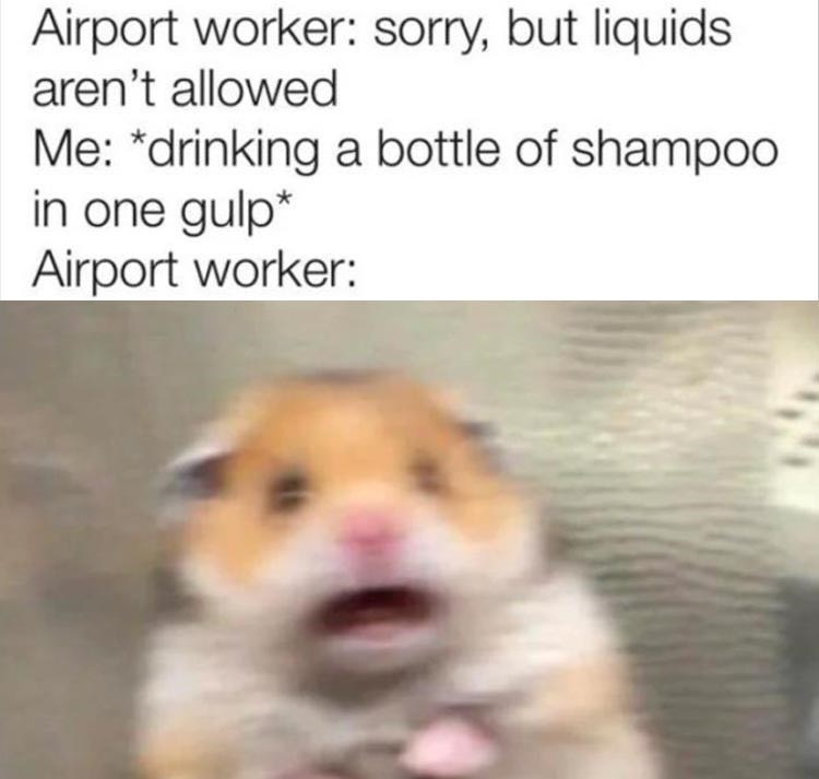 """Mammal - Airport worker: sorry, but liquids aren't allowed Me: """"drinking a bottle of shampoo in one gulp* Airport worker:"""
