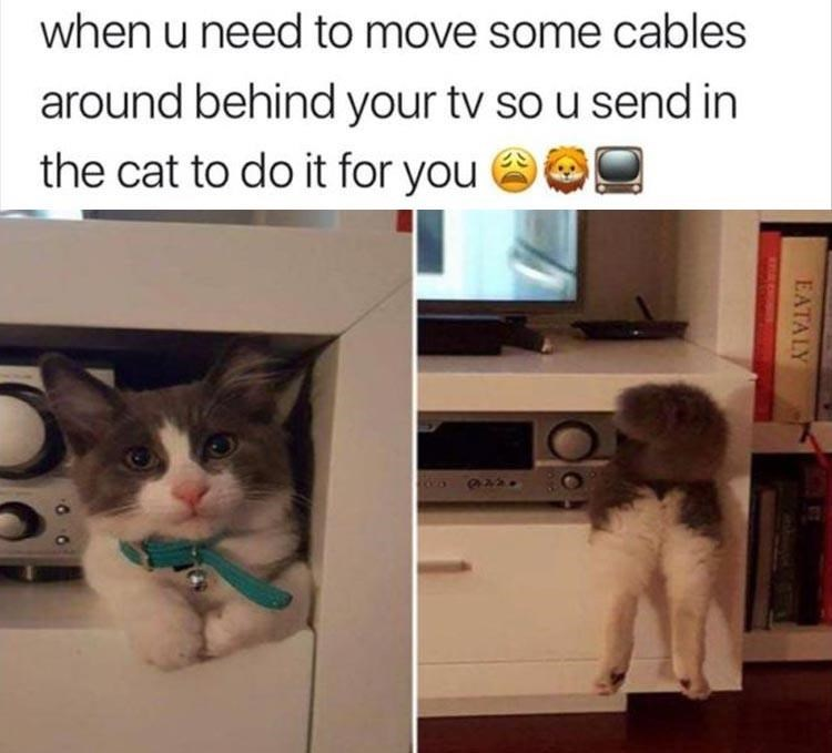 Cat - when u need to move some cables around behind your tv so u send in the cat to do it for you EATALY