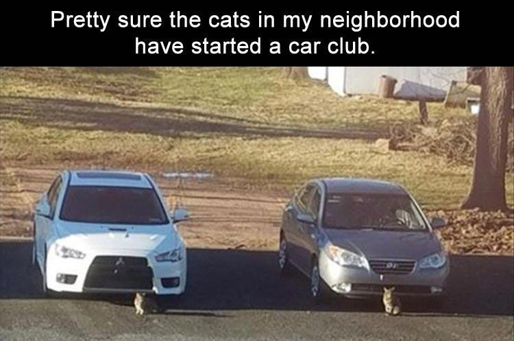 Land vehicle - Pretty sure the cats in my neighborhood have started a car club.