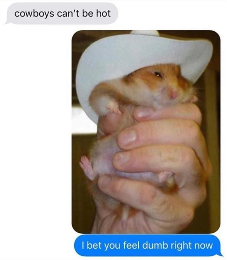 Hamster - cowboys can't be hot I bet you feel dumb right now