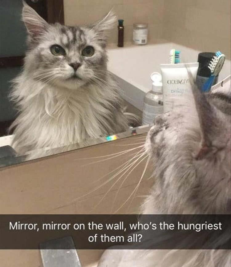 Cat - Mirror, mirror on the wall, who's the hungriest of them all?