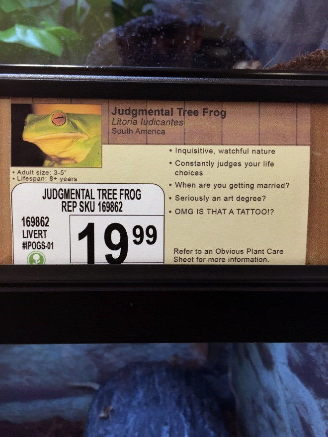 "Text - Judgmental Tree Frog Litoria ludicantes South America .Inquisitive, watchful nature . Constantly judges your life Adult size: 3-5"" Lifespan: 8+ years choices .When are you getting married? JUDGMENTAL TREE FROG REP SKU 169862 .Seriously an art degree? OMG IS THAT A TATTOO!? 169862 19 .99 LIVERT #POGS-01 Refer to an Obvious Plant Care Sheet for more information."