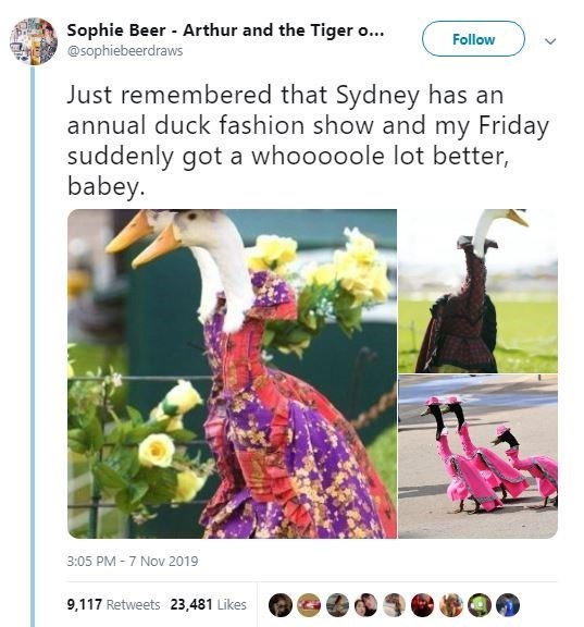 Adaptation - Sophie Beer Arthur and the Tiger o... @Sophiebeerdraws Follow Just remembered that Sydney has an annual duck fashion show and my Friday suddenly got a whooooole lot better, babey. 3:05 PM-7 Nov 2019 9,117 Retweets 23,481 Likes