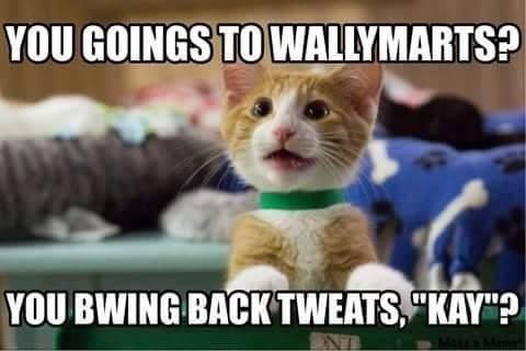 cat memes - 9389864704