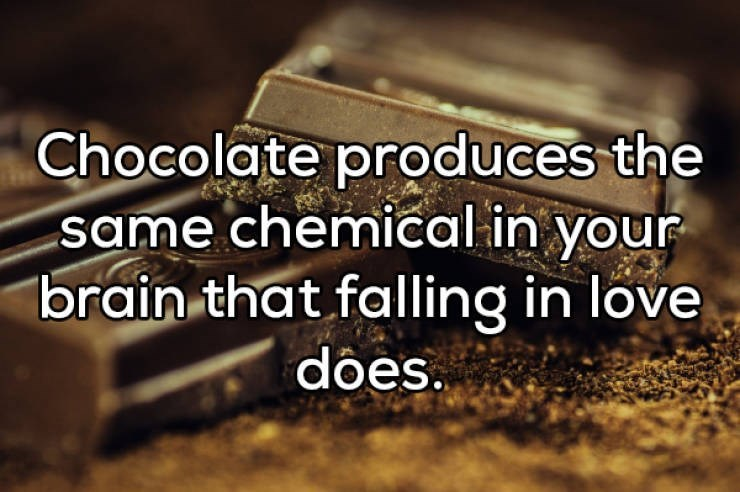 Text - Chocolate produces the same chemical in your brain that falling in love does.