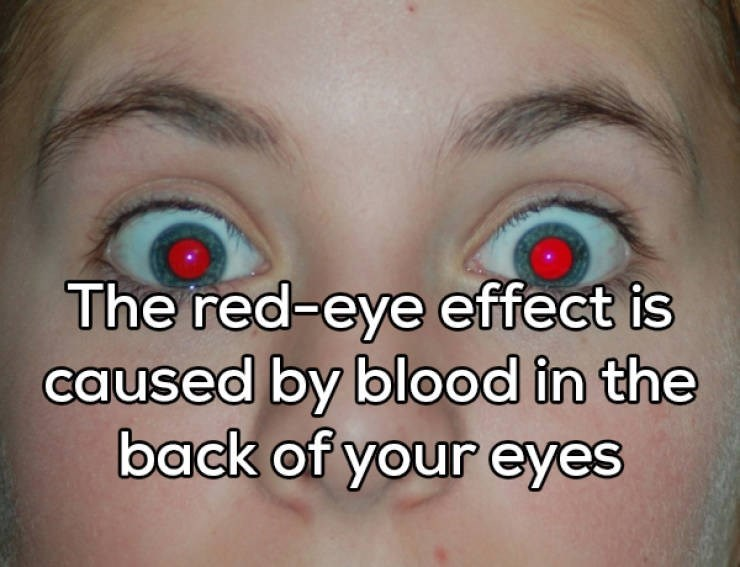Face - The red-eye effect is caused by blood in the back of your eyes