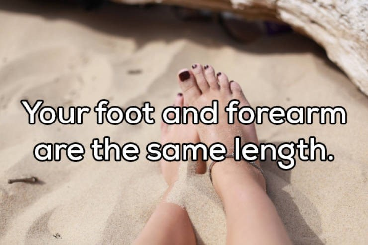 Skin - Your foot and forearm are the same length.