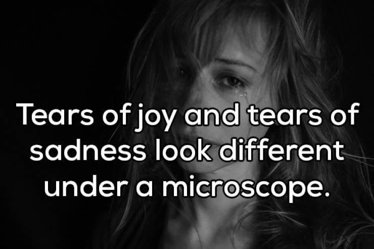 Text - Tears of joy and tears of sadness look different under a microscope.
