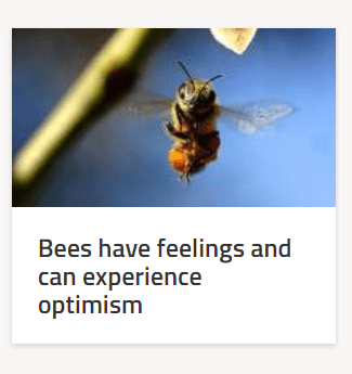 Honeybee - Bees have feelings and can experience optimism