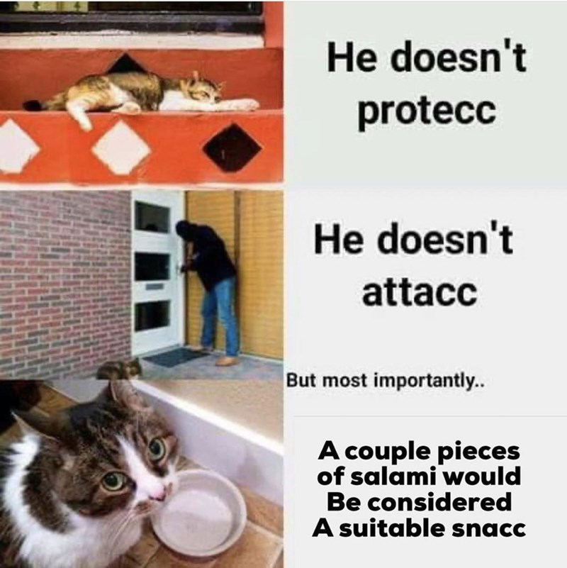 Cat - He doesn't protecc He doesn't attacc But most importantly. A couple pieces of salami would Be considered A suitable snacc