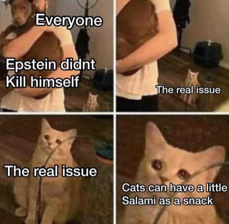 Cat - Everyone Epstein didnt Kill himself The real issue The real issue Cats can have a little Salami as a snack