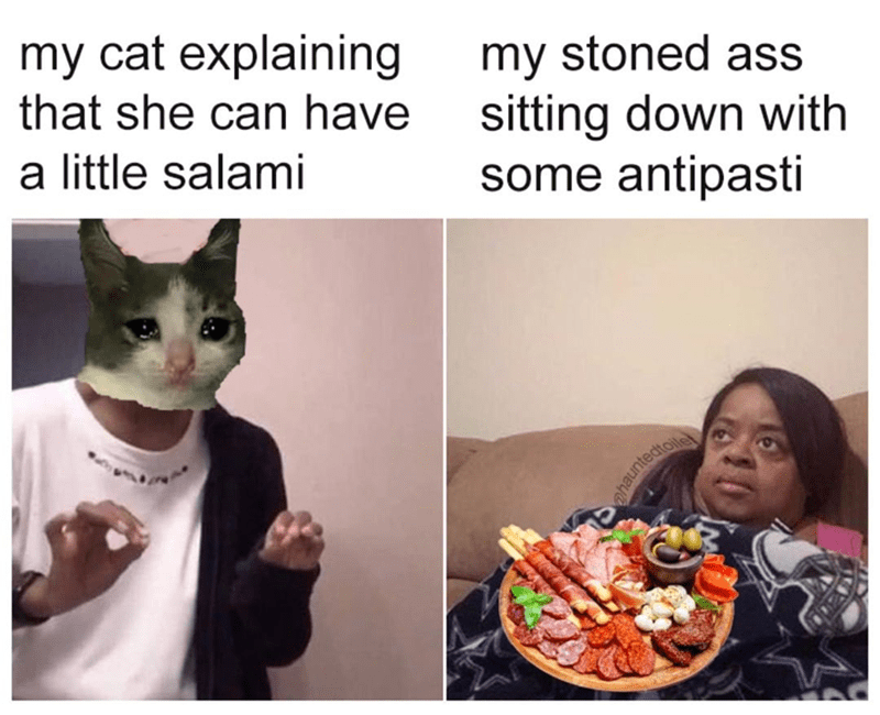 Cat - my cat explaining that she can have my stoned ass sitting down with some antipasti a little salami ahauntedtiois