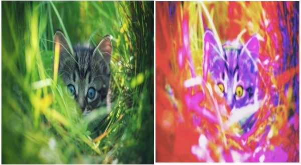animal vision
