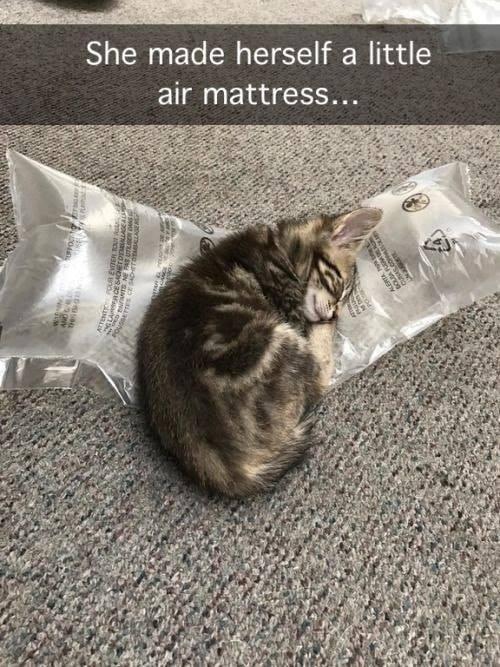 cat memes - 9390418944