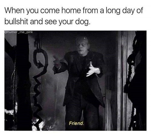 Text - When you come home from a long day of bullshit and see your dog. phumor me pink Friend.