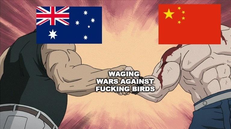 Cartoon - WAGING WARS AGAINST FUCKING BIRDS