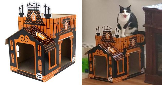 cats scratcher halloween mansion