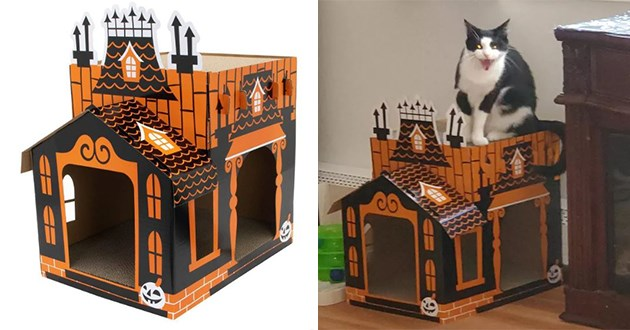 cats scratcher halloween mansion