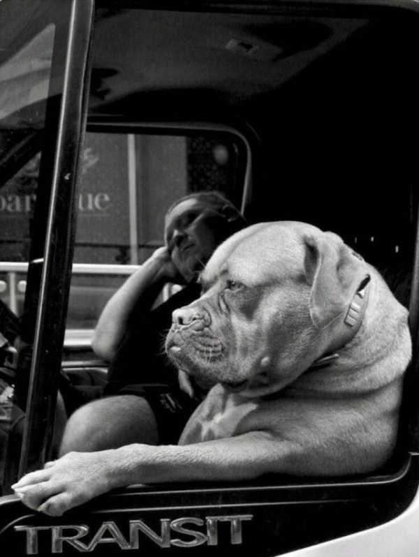Dog - ar ue TRANSIT