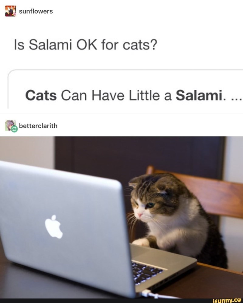Cat - sunflowers Is Salami OK for cats? Cats Can Have Little a Salami. ... betterclarith ifunny.co
