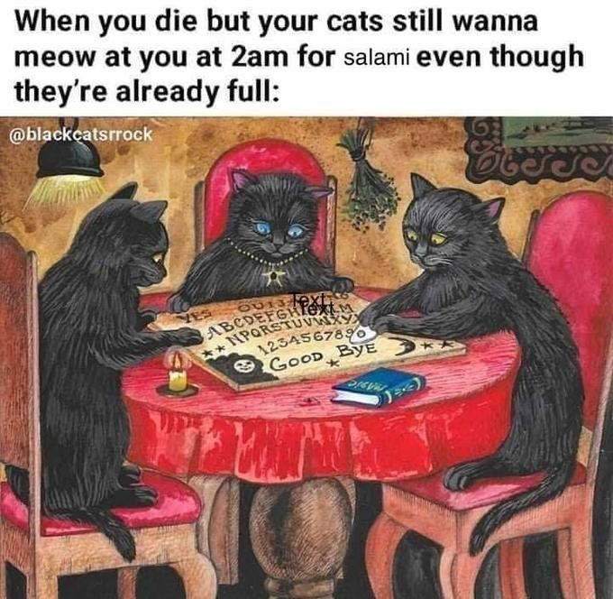 Games - When you die but your cats still wanna meow at you at 2am for salami even though they're already full: @blackcatsrrock ABCDEFGHfex NPORSTUVR 1254567890 GOOD ByE 2IEVA