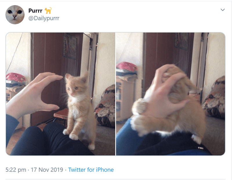 Cat - Purrr @Dailypurrr 5:22 pm 17 Nov 2019 Twitter for iPhone