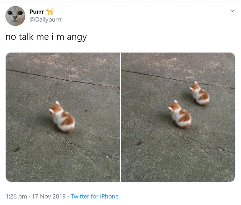 Organism - Purrr @Dailypurrr no talk me i m angy 1:26 pm 17 Nov 2019 Twitter for iPhone