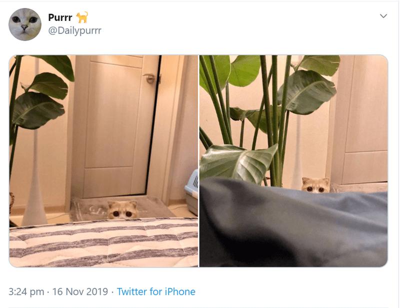 Product - Purrr @Dailypurrr 3:24 pm 16 Nov 2019 Twitter for iPhone